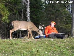 Cals hunting tip, stay alert
